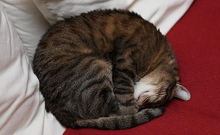kočka I