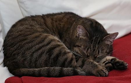kočka II