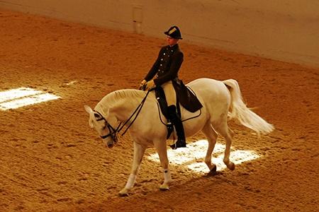 Španělská jezdecká škola IV