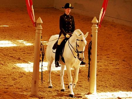 Španělská jezdecká škola VI