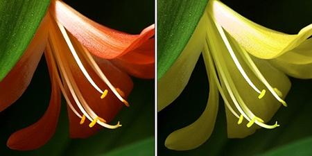 Změňte vybrané barvy na fotce v Zoner PhotoStudiu 15