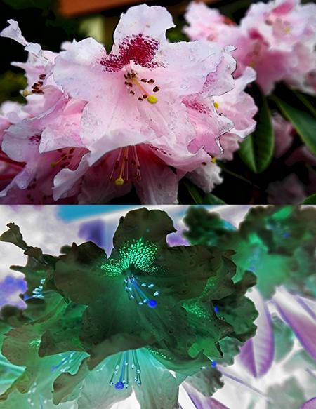 inteligentní filtry aplikované na květy