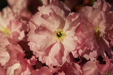 květ I