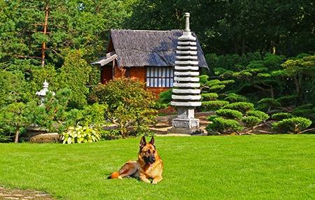 japonská zahrada III