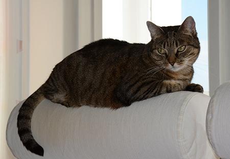 kočka v protisvětle