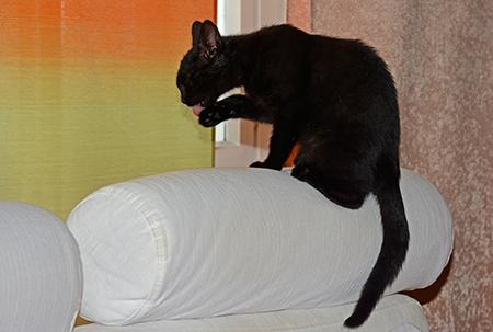 černé kotě I