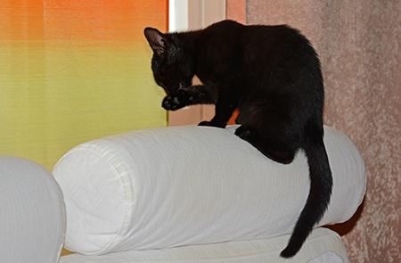 černé kotě II