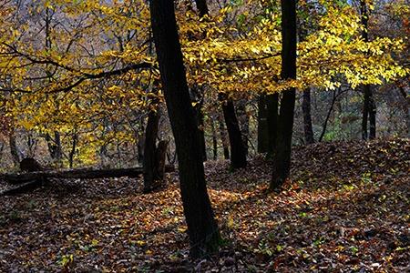 Nikon AF-S Nikkor 50 mm 1:1,4G - podzimní les I