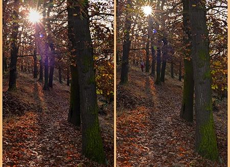 Nikon AF-S Nikkor 50 mm 1:1,4G - podzimní les II